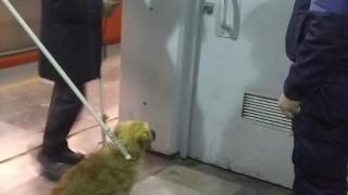 Tarjeta Informativa: Rescate de can en la Línea B